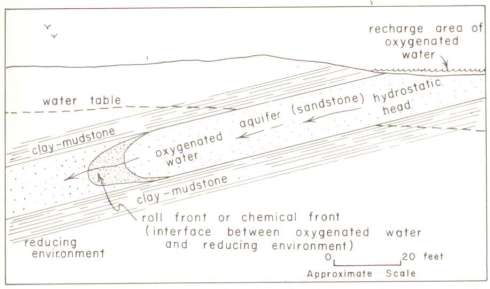 Roll Front Cross Section